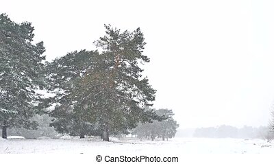 Beautiful nature blizzard christmas tree in winter landscape...