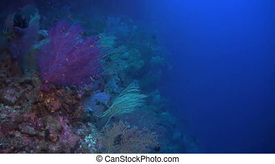 Sea fans and whip corals on a coral reef