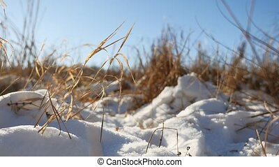 Winter dry grass landscape in the snow field snow nature -...