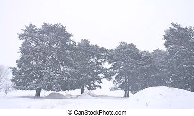 Beautiful christmas nature tree blizzard in winter landscape...