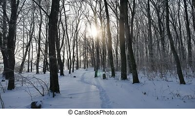 winter forest tree trunks in the snow nature landscape...