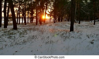 winter and sun landscape forest. christmas sunlight tree...
