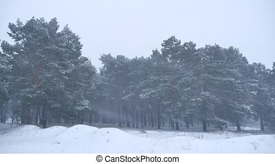 Beautiful christmas blizzard tree in winter landscape nature...