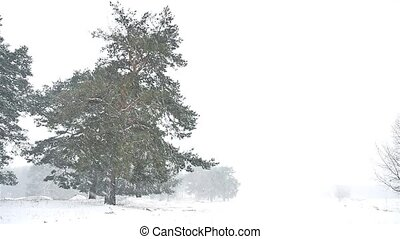 snowstorm blizzard the woods snowing nature winter,...