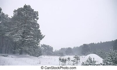 snowstorm the woods snowing blizzard winter, christmas tree...