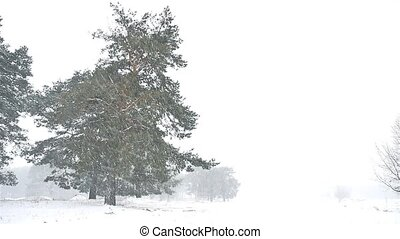 snowstorm blizzard the woods nature snowing winter,...