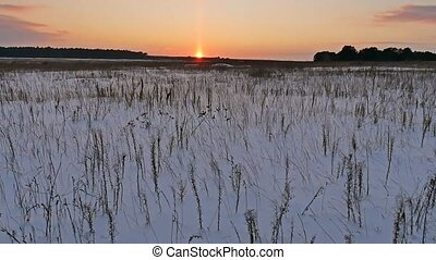 winter landscape with snow field of dry grass late nature in...