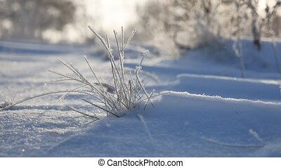 frozen grass sways in the wind in the winter snow falls...