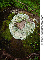 Lichen forming natural heart shape on rack on clud forest