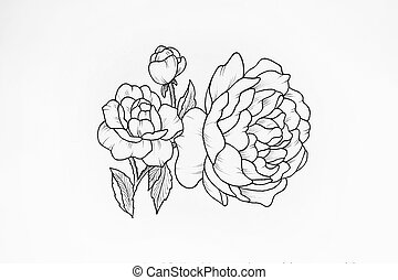 Sketch of beautiful peony on white background. - Sketch of...
