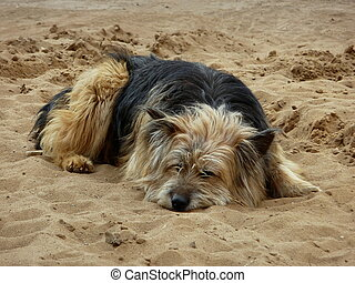 Lonely dog - Lonely cute dog sleeps on a sand beach