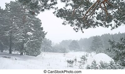 Beautiful christmas tree nature blizzard in winter landscape...