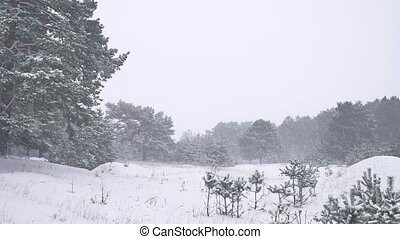 Beautiful christmas tree blizzard in winter landscape nature...