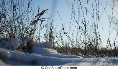 dry grass sways in the wind winter snow landscape field...