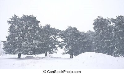 snowstorm nature the woods snowing blizzard winter,...
