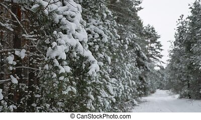 Christmas tree branch in snow pine winter fairy nature...