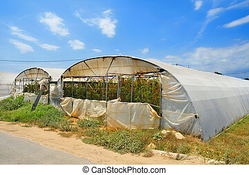 high tunnels - some high tunnels with tomato cultivars