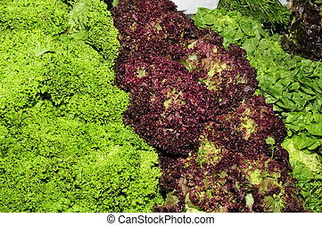 escarole endives - some different types of escarole endive...