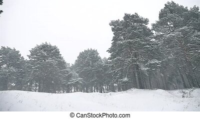 snowstorm the woods snowing blizzard nature winter,...