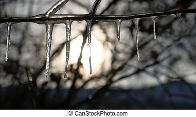 icicles on tree branches frozen water drips sunset sunshine...