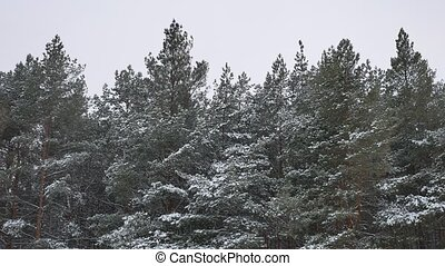 Winter tree tops in the snow winter forest nature landscape...
