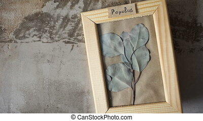 Poplar leaves in picture frame on wall interior