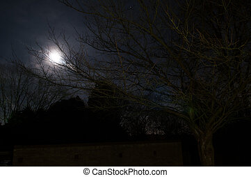 Night scene on a bright moonlit night