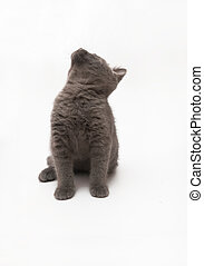gray kitten with big surprised eyes isolated.