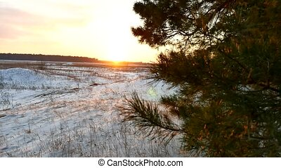 winter and forest sun landscape. christmas sunlight tree...