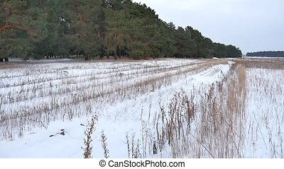 pine forest motion winter christmas tree snow field in...