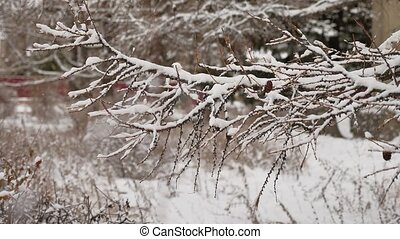 dry branches tree with pine cones winter snow nature...