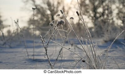 frozen grass sways in the wind in the winter snow sunlight...