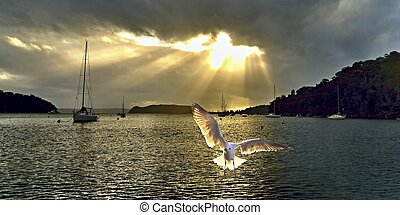 Seagull at Sunrise with Crepuscular Rays. - Bright...