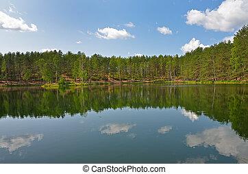 Trees on lake