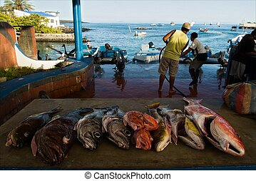 The fish market - On a counter fresh fish lies Fishermen on...