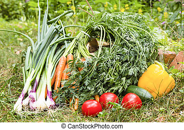 vegetables - harvest of vegetables in a garden