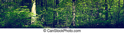 Green forest scenery in panorama