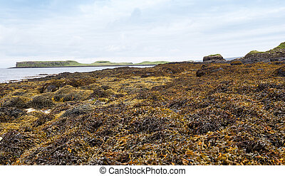 Coral Beach on the Isle of Skye, Scotland - Coral Beach on...