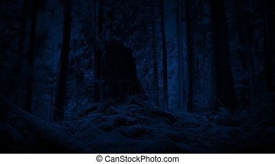 Moving Through Woods At Night - Tracking shot passing large...
