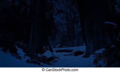 Moving Through Snowy Forest At Night - Dolly shot moving...