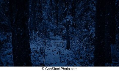 Snow Falling On Forest Path At Night - Trail through snowy...