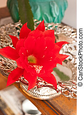 Orchid cactus - Epiphyllum is a genus of 19 species of...