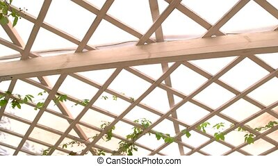 Wooden pergola roof. White planks and green leaves. Patio in...