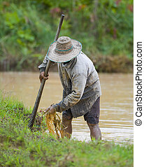 asian farmer preparing the ground for the growth of rice