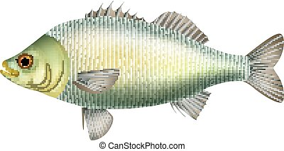 Illustration of fish isolated on white background - Vector...