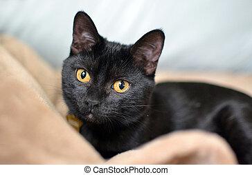 Kitten lying in blankets