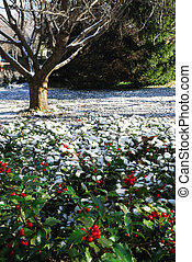 Fresh Snowfall - Fresh snow in yard of surburban house