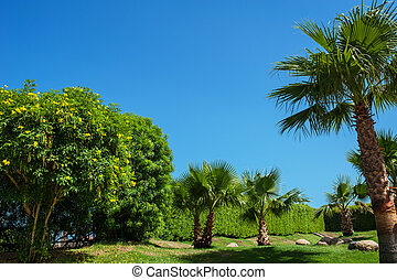 beautiful park with Palm trees against the blue sky