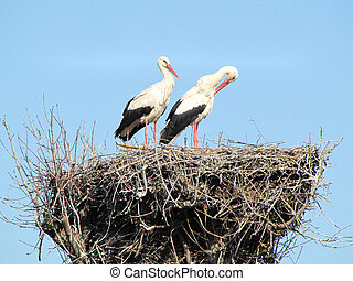pair of storks in the nest on the blue sky background