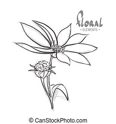 Wild flower on a white background with a place for an...